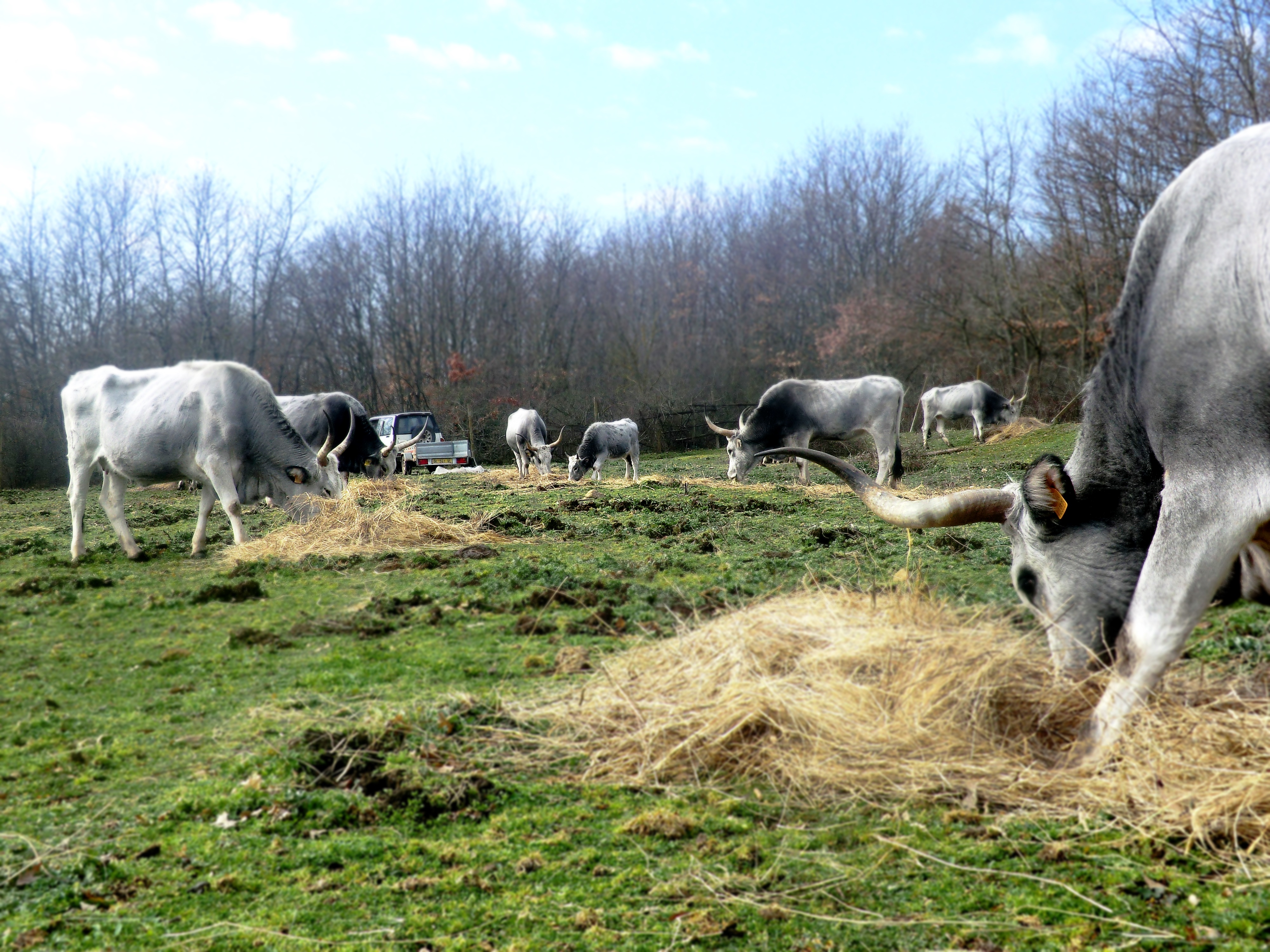 Chi siamo azienda agricola santella for Piccolo cottage che vive
