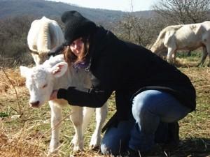 vitello allo stato brado
